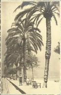 CPA De NICE - La Neige - Février 1929. - Unclassified
