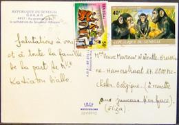 Senegal - Postcard To Belgium 1980 Chimpanzee Orange Musical Instruments - Chimpanzees