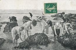 Peche Aux Moules Mussels Collectors - Fishing
