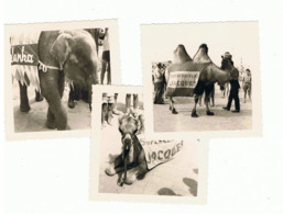 Lot De 3 Photos ( 7 X 7 Cm ) Aan De Kust - Côte Belge  1960  - Chameau Et éléphant Publicité  Chocolat JACQUES   (b290) - Lieux