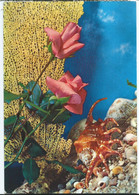 Postcard In Italy,canceled Yugoslavia 1969,motive Roses And Shells - Fiori