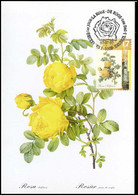 2709 - MK - Zwavelgele Roos - Rosa Sulfurea #2 - 1991-2000