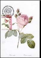 2710 - MK - Honderdbladige Roos - Rosa Centifolia #3 - 1991-2000