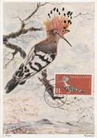 Carte Maximum Card Oiseau Bird Bulgarie Bulgaria 1959 Huppe Fasciée Wiedehopt - FDC