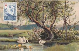 Carte Maximum Card Oiseau Bird Finlande Finland  Cygne Swan 1957 Carte Reutilisée - Maximum Cards & Covers