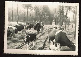 Carte Photo - 1945 - Westerlo - Westerloo - Voir Scans - Westerlo