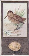 48 Woodcock - British Birds & Their Eggs 1936  -  Phillips Cigarette Card - Original - Wildlife - Phillips / BDV