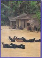 Carte Postale Afrique Gabon  Repos Au Village   Très Beau Plan - Gabon