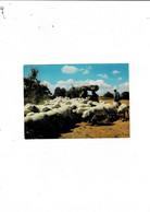 ROQUEFORT Pérennité De La Pastorale Depuis Les Temps Druidiques - Roquefort