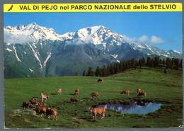 °°° Cartolina - Val Di Pejo Nel Parco Nazionale Dello Stelvio Viaggiata (l) °°° - Trento