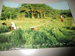 B796  Arabia Saudita Giardini - Saudi Arabia