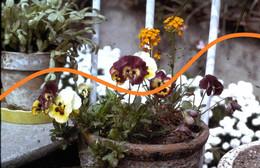 LOT 22 DIAPOSITIVES ORIGINALES (collection Privée) -dont Flore, Fleurs, Personnes Anonymes - Dias