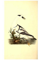 Reproducción/Reproduction 49530703468: The Natural History Of British Birds, Or, A Selection Of The Most Rare,... - Other