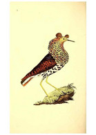 Reproducción/Reproduction 49531430242: The Natural History Of British Birds, Or, A Selection Of The Most Rare,... - Other