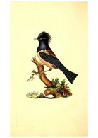 Reproducción/Reproduction 49531424542: The Natural History Of British Birds, Or, A Selection Of The Most Rare,... - Other