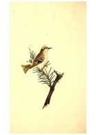Reproducción/Reproduction 49530698073: The Natural History Of British Birds, Or, A Selection Of The Most Rare,... - Other
