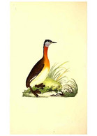 Reproducción/Reproduction 49530699048: The Natural History Of British Birds, Or, A Selection Of The Most Rare,... - Other