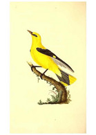 Reproducción/Reproduction 49531201826: The Natural History Of British Birds, Or, A Selection Of The Most Rare,... - Other