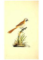 Reproducción/Reproduction 49531423942: The Natural History Of British Birds, Or, A Selection Of The Most Rare,... - Other