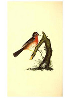 Reproducción/Reproduction 49531427357: The Natural History Of British Birds, Or, A Selection Of The Most Rare,... - Other