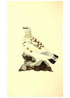 Reproducción/Reproduction 49531427997: The Natural History Of British Birds, Or, A Selection Of The Most Rare,... - Other