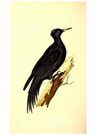Reproducción/Reproduction 49531203946: The Natural History Of British Birds, Or, A Selection Of The Most Rare,... - Other