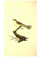 Reproducción/Reproduction 49531428727: The Natural History Of British Birds, Or, A Selection Of The Most Rare,... - Other