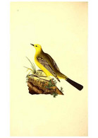 Reproducción/Reproduction 49531204626: The Natural History Of British Birds, Or, A Selection Of The Most Rare,... - Other