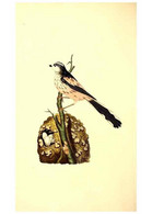 Reproducción/Reproduction 49531429332: The Natural History Of British Birds, Or, A Selection Of The Most Rare,... - Other