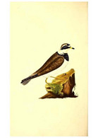 Reproducción/Reproduction 49531205381: The Natural History Of British Birds, Or, A Selection Of The Most Rare,... - Other