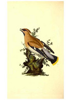 Reproducción/Reproduction 49531203291: The Natural History Of British Birds, Or, A Selection Of The Most Rare,... - Other