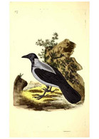 Reproducción/Reproduction 49531749162: The Natural History Of British Birds, Or, A Selection Of The Most Rare,... - Other