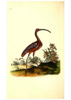 Reproducción/Reproduction 49531749492: The Natural History Of British Birds, Or, A Selection Of The Most Rare,... - Other