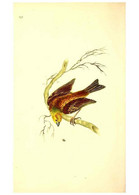 Reproducción/Reproduction 49531021448: The Natural History Of British Birds, Or, A Selection Of The Most Rare,... - Other