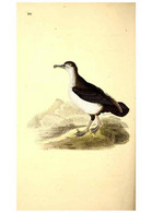 Reproducción/Reproduction 49531233283: The Natural History Of British Birds, Or, A Selection Of The Most Rare,... - Other