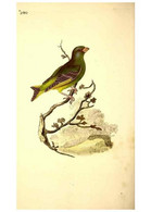 Reproducción/Reproduction 49531736611: The Natural History Of British Birds, Or, A Selection Of The Most Rare,... - Other