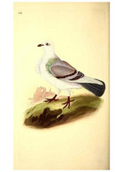 Reproducción/Reproduction 49531959297: The Natural History Of British Birds, Or, A Selection Of The Most Rare,... - Other