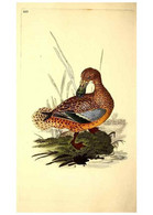 Reproducción/Reproduction 49531228188: The Natural History Of British Birds, Or, A Selection Of The Most Rare,... - Other