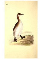 Reproducción/Reproduction 49531955067: The Natural History Of British Birds, Or, A Selection Of The Most Rare,... - Other