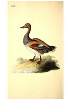 Reproducción/Reproduction 49531732266: The Natural History Of British Birds, Or, A Selection Of The Most Rare,... - Other