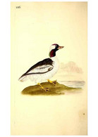 Reproducción/Reproduction 49531955487: The Natural History Of British Birds, Or, A Selection Of The Most Rare,... - Other