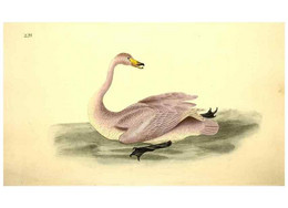 Reproducción/Reproduction 49531956002: The Natural History Of British Birds, Or, A Selection Of The Most Rare,... - Other