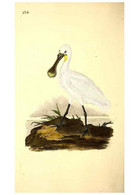 Reproducción/Reproduction 49531231138: The Natural History Of British Birds, Or, A Selection Of The Most Rare,... - Other
