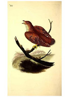 Reproducción/Reproduction 49531231413: The Natural History Of British Birds, Or, A Selection Of The Most Rare,... - Other