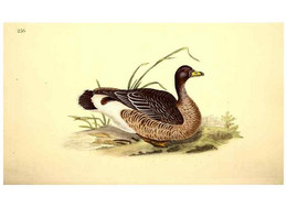 Reproducción/Reproduction 49531231703: The Natural History Of British Birds, Or, A Selection Of The Most Rare,... - Other