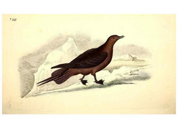 Reproducción/Reproduction 49531231983: The Natural History Of British Birds, Or, A Selection Of The Most Rare,... - Other