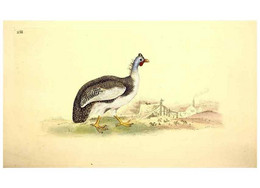 Reproducción/Reproduction 49531735986: The Natural History Of British Birds, Or, A Selection Of The Most Rare,... - Other