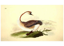 Reproducción/Reproduction 49531733731: The Natural History Of British Birds, Or, A Selection Of The Most Rare,... - Other