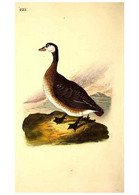 Reproducción/Reproduction 49531731561: The Natural History Of British Birds, Or, A Selection Of The Most Rare,... - Other