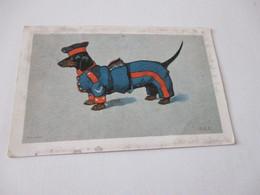 Teckel, Dackel, Dachshund - Hunde